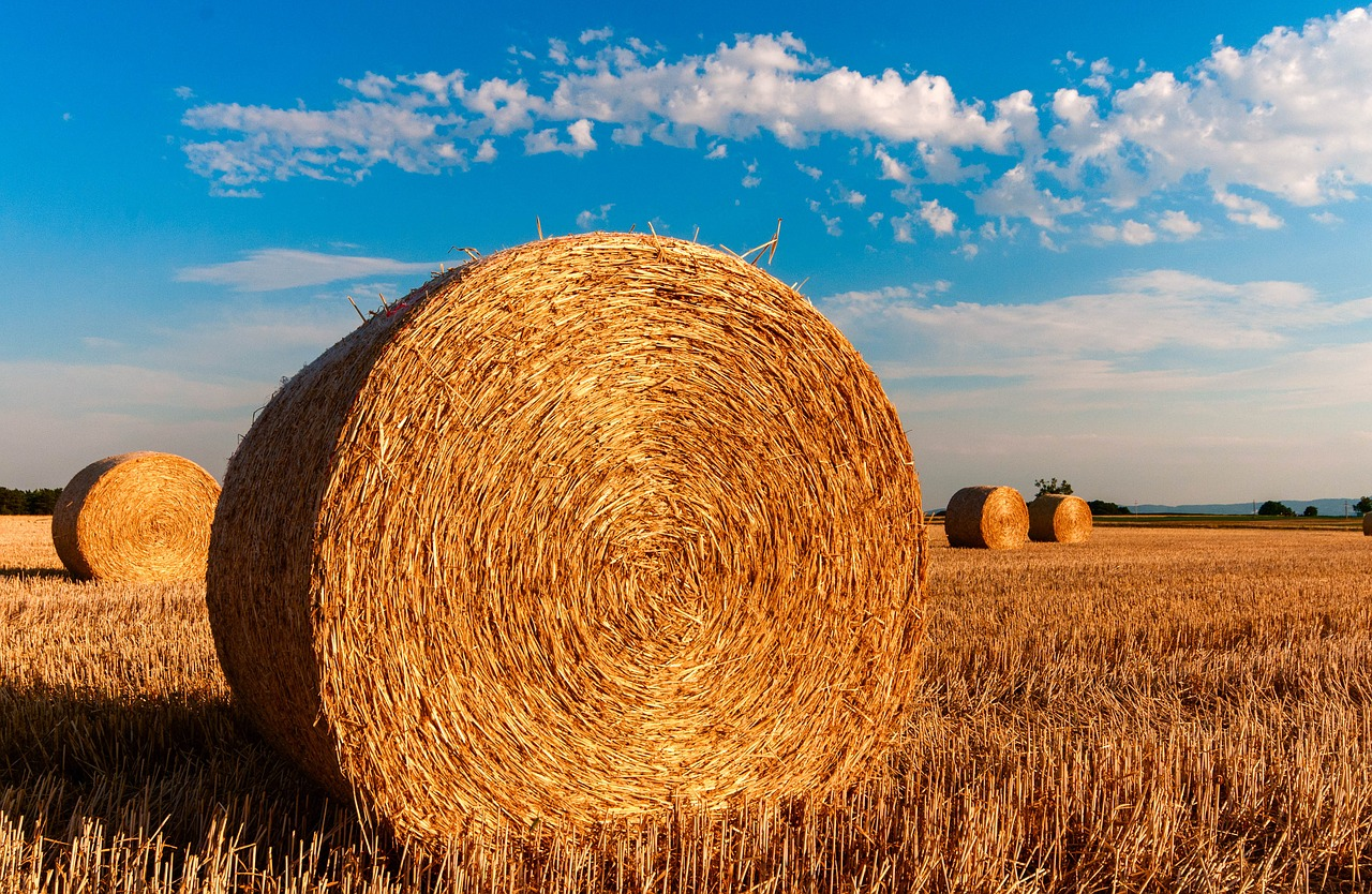 Hay bales in a field on a sunny day.